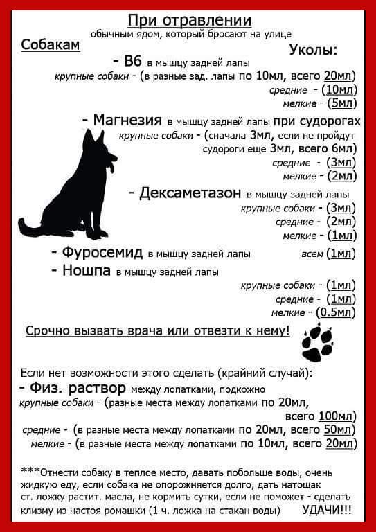 Отравления у собак как лечить в домашних условиях